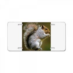 Squirrel License Plate   Artistshot