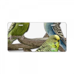 bird pet budgie parrot animals License Plate | Artistshot